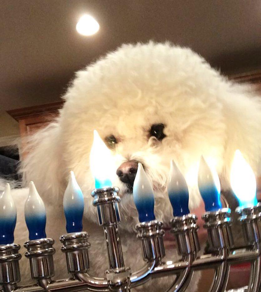Riley jewish puppy chitribe