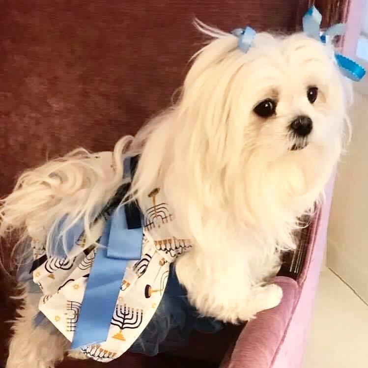 lily mazel Jewish Puppy ChiTribe