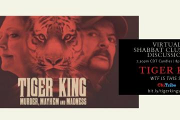 tiger king shabbat cluster chitribe