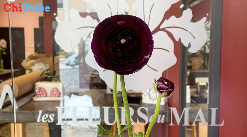 jewish business of the month Les Fleurs du Mal